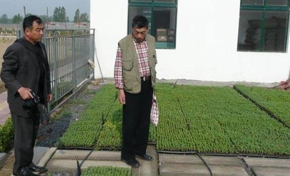 <b>中国菊艺大师叶家良指菊花种苗生产导</b>