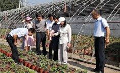 <b>中国花卉协会调研我所国家菊花种质资源库建设情况</b>